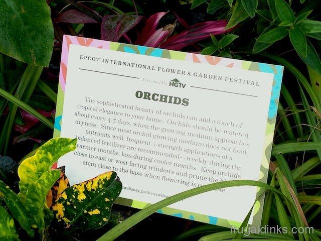 epcot-flower-and-garden-2012-24