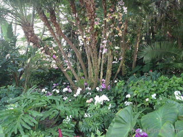 epcot-flower-and-garden-2012-25