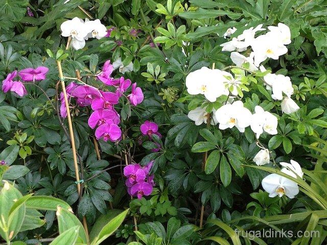 epcot-flower-and-garden-2012-27