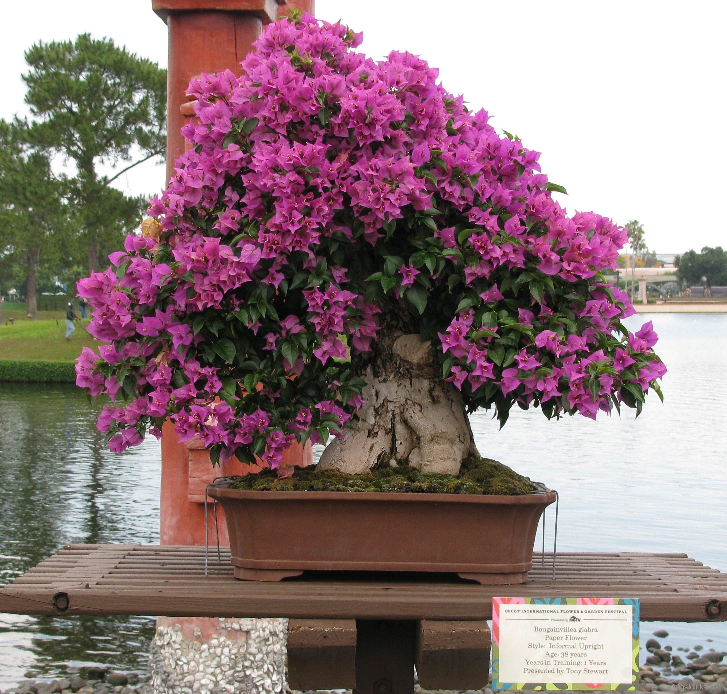 2011-epcot-flower-garden-festival-63