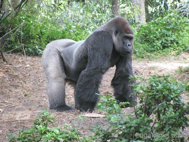 wild-africa-trek-2011-45