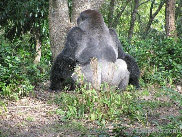 wild-africa-trek-2011-46