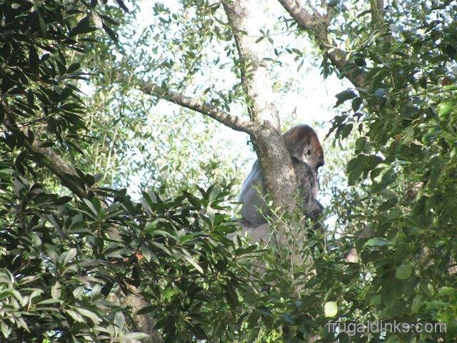 wild-africa-trek-2011-47