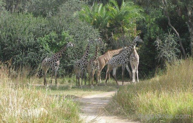 wild-africa-trek-2011-21