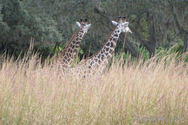 wild-africa-trek-2011-23