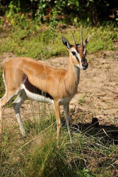 wildafricatrek-157