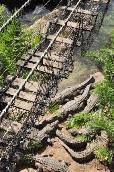 wild africa trek  u2013 crossing the bridges  u00ab extra walt
