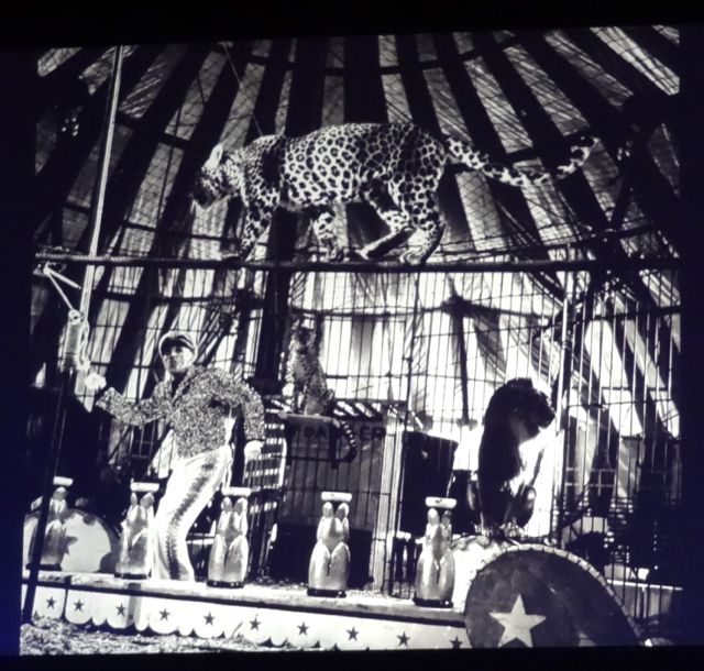 Inside the circus tent