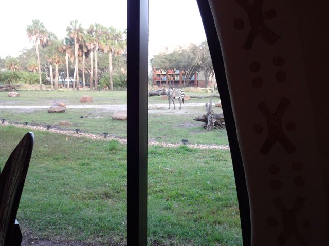 This is the only restaurant at Walt Disney World where you can watch zebras graze while you eat