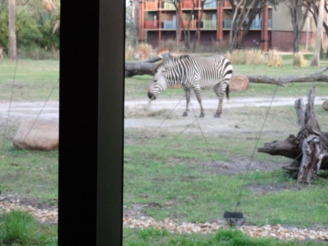 We looked away briefly and there was another zebra