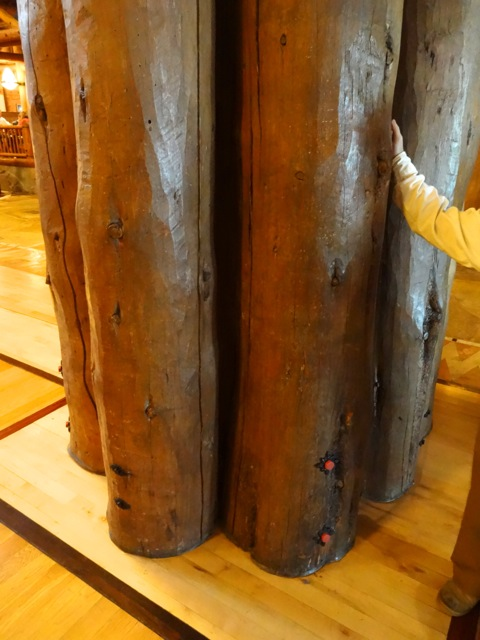 Real lodge pole pine taken from deadwood forests... the architects used 85 truckloads of lodge pole pine in the construction of Wilderness Lodge (not used for structural support).