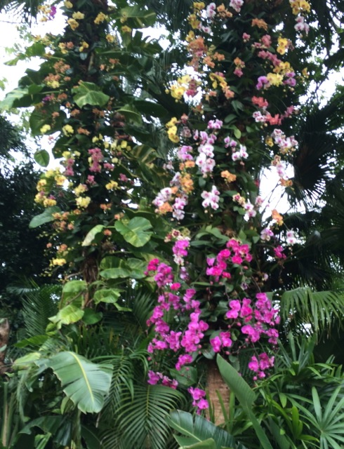 Orchids #epcot #flowerandgardenfest 2014 - 1