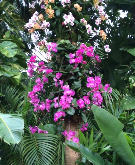 Orchids #epcot #flowerandgardenfest 2014 - 2