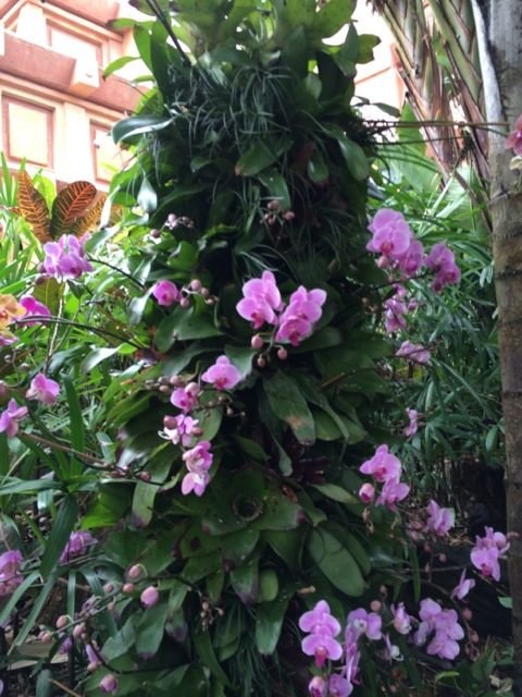 Orchids #epcot #flowerandgardenfest 2014 - 5
