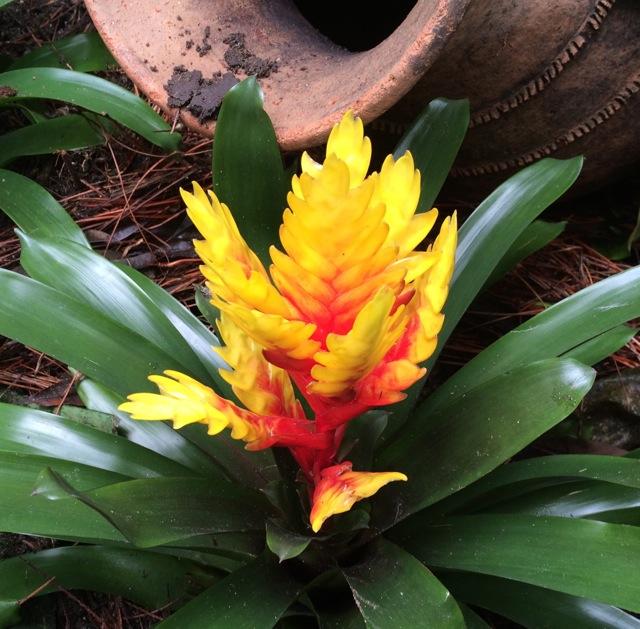 Orchids #epcot #flowerandgardenfest 2014 - 8
