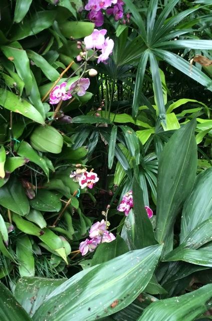 Orchids #epcot #flowerandgardenfest 2014 - 9