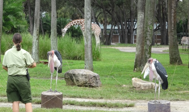 storks are stationing